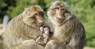 La forêt des singes de Rocamadour